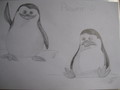 Private Drawings - penguins-of-madagascar fan art