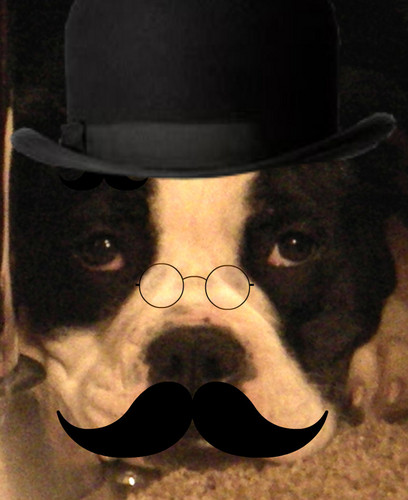Professor Bulldog