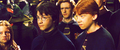 Ron Weasley - ronald-weasley photo