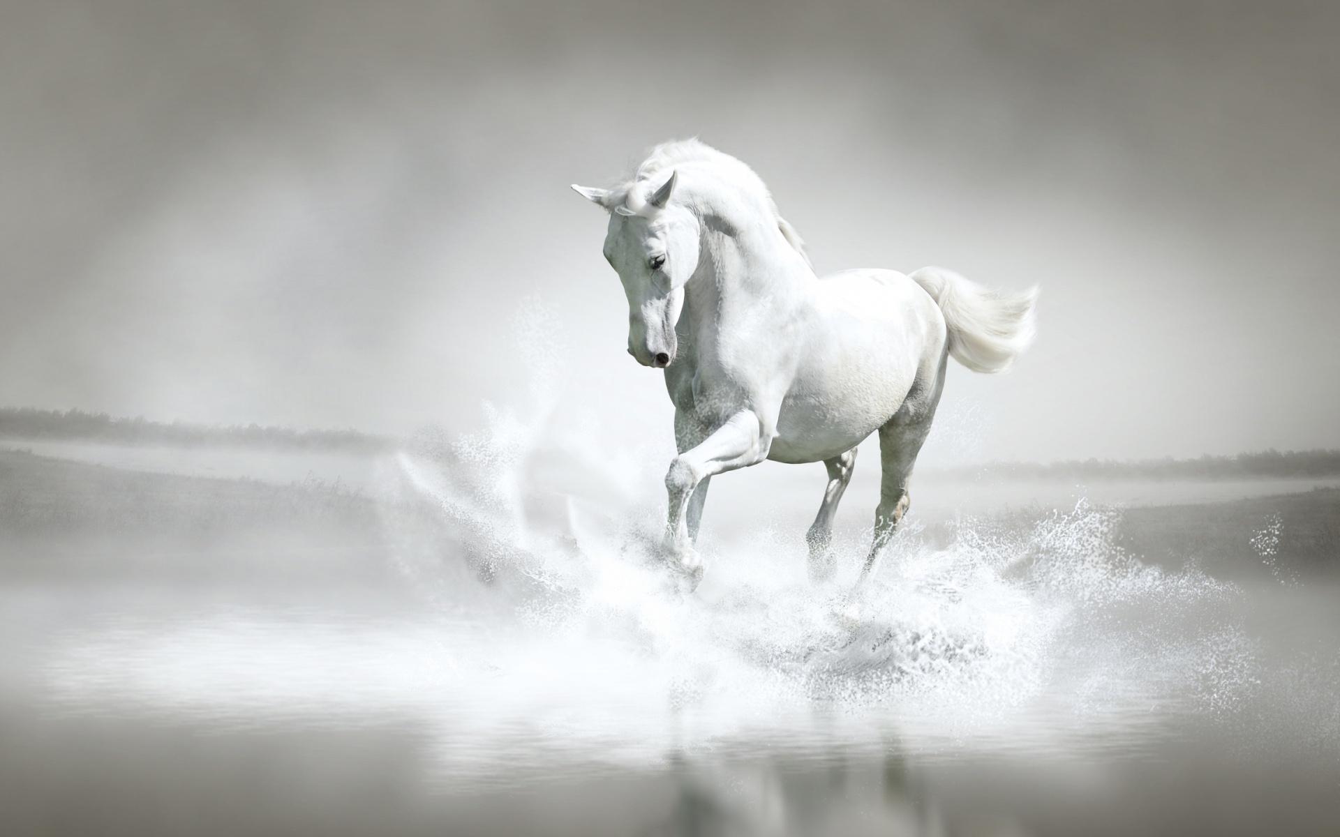 Stunning White Horse Animals Photo 34914984 Fanpop
