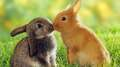 bunnies - bunny-rabbits photo