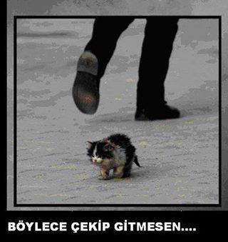 homeless animals in turkey