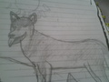my husky drawing!!