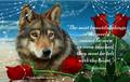 wolf poems - wolves photo