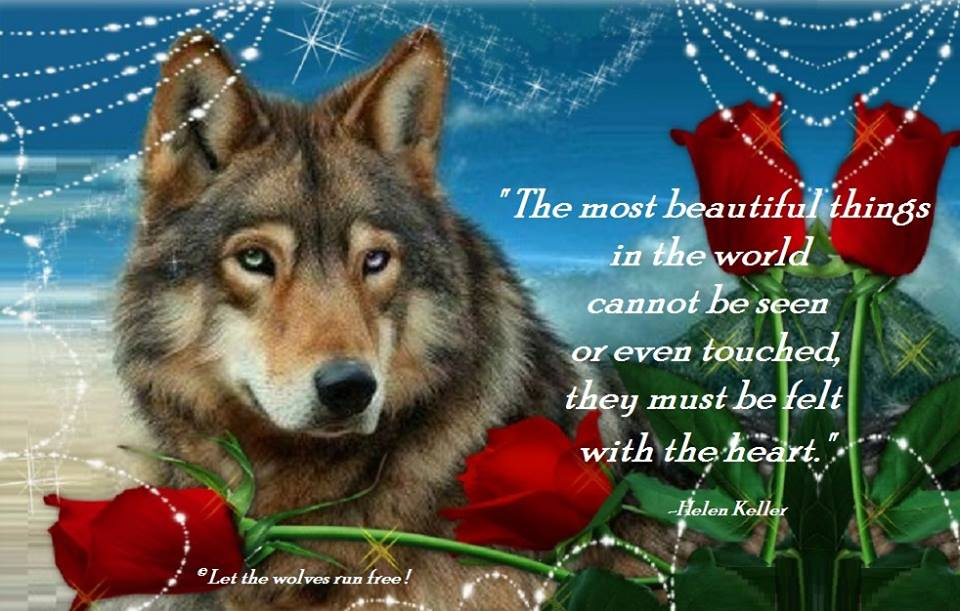 Pin Wolf-poem on Pinterest