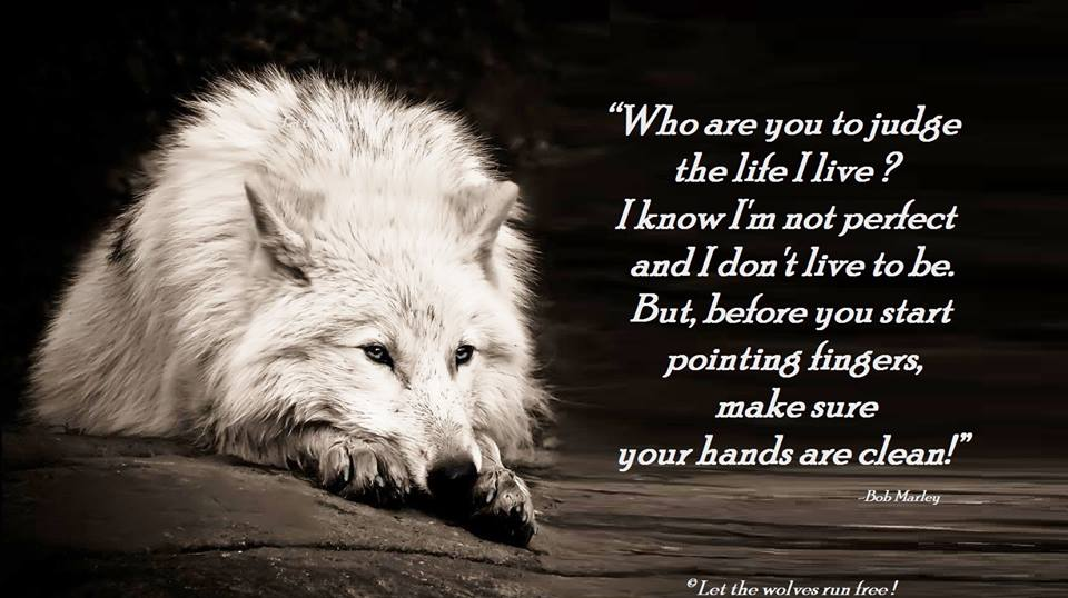 [Image: wolf-poems-wolves-34908710-960-538.jpg]