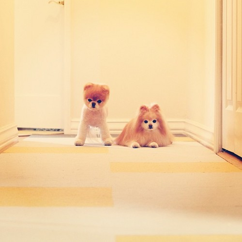 ★ Boo&Buddy ☆