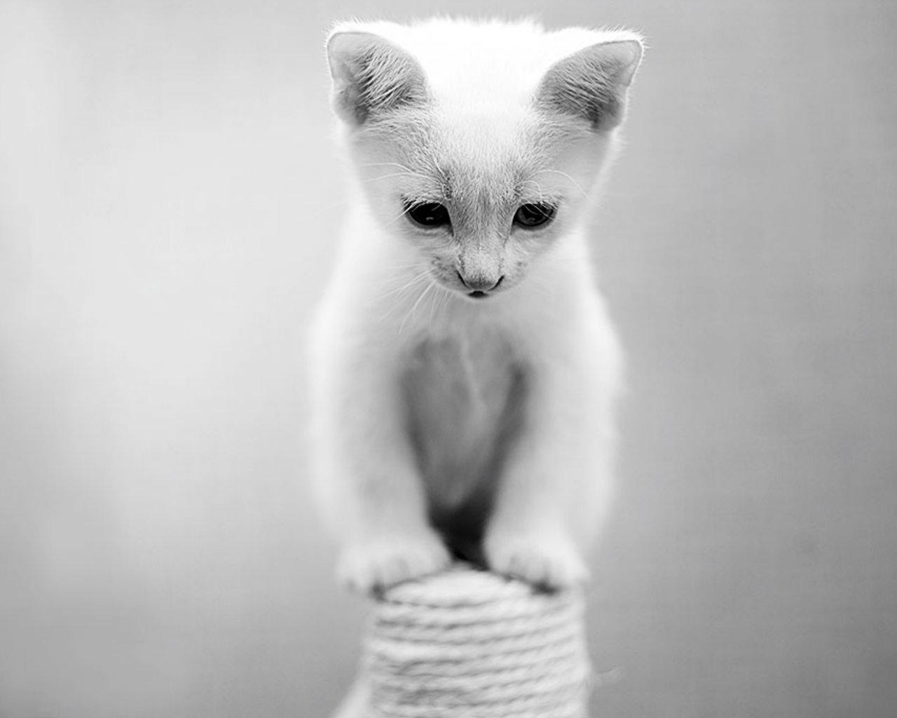 猫很可爱的照片