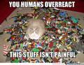 Cat on lego