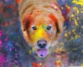 Colorful Dog Wallpaper - random wallpaper