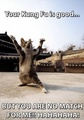 Kung fu kitty - lol-cats photo