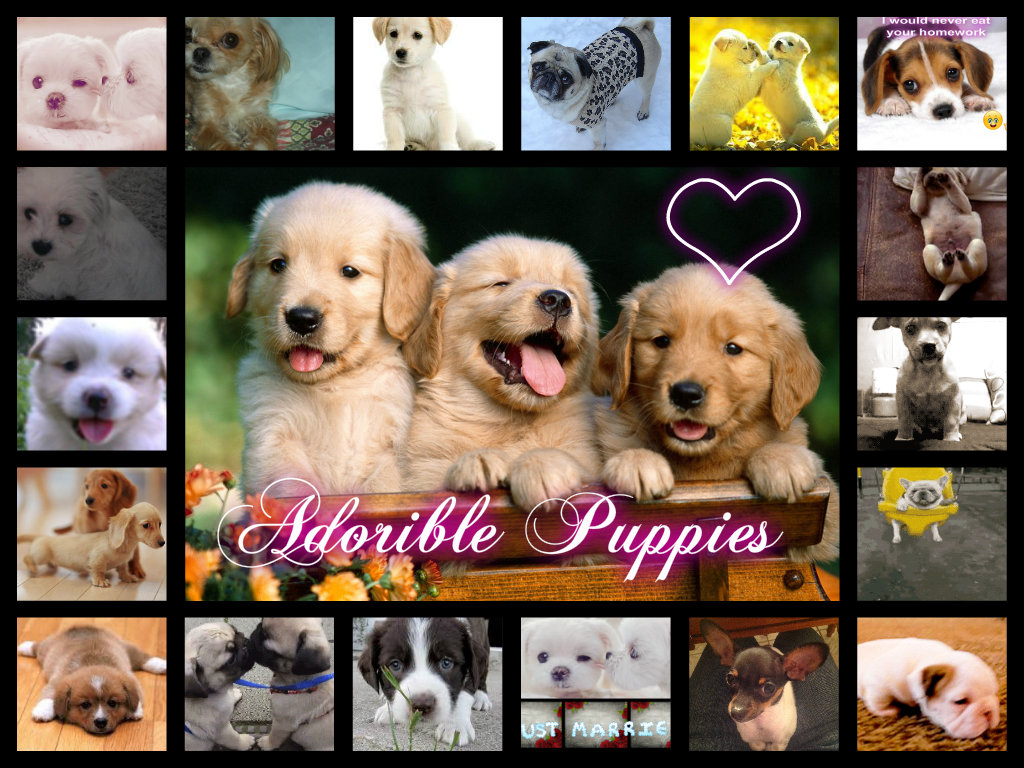 Puppies images Puppies HD wallpaper and background photos ...