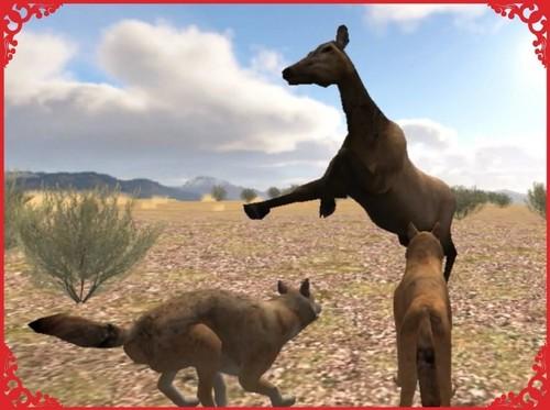 lobo vs Cow Elk