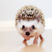 cuteness  - animals icon