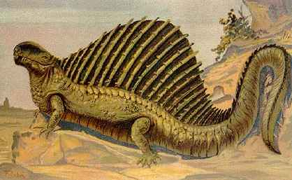 Dinosaurs wallpaper containing a triceratops entitled Dimetrodon