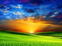 Mother Nature wallpaper with a grainfield, a sunset, and cultivated rice called Landscape