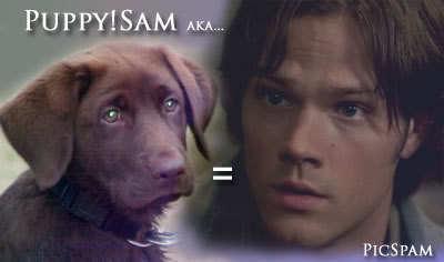 कुत्ते का बच्चा, पिल्ला Sam