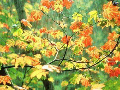 Mother Nature wallpaper with a red buckeye, a st peter's wort, and a spurge called Rain