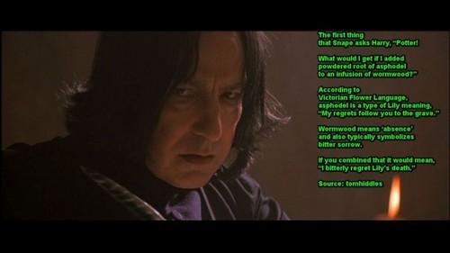 Severus Reflects on Lily