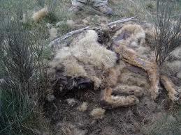 Stop lobo Slaughter