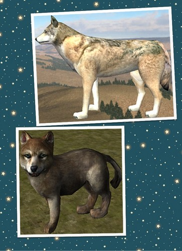 WQ lobo breeding image