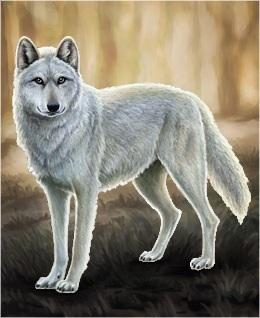 WolfQuest image