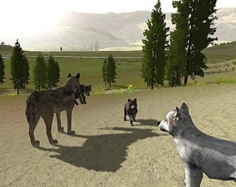 Wolves and Pups