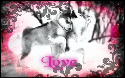 love of huskies