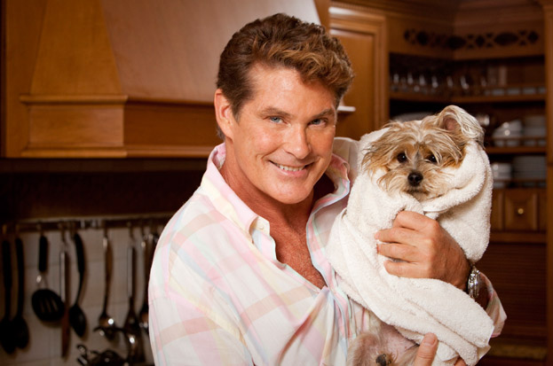 David Hasselhoff Bilder The Hoff Hintergrund And Background Fotos