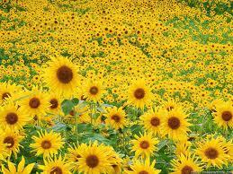 ✿ Цветы ✿