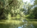 Danube Delta Romania scenery - romania photo