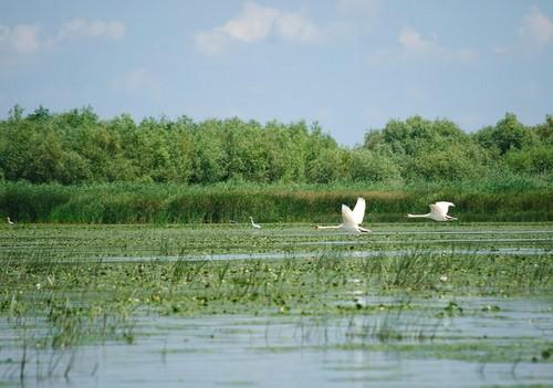 Danube Delta Romania landscape