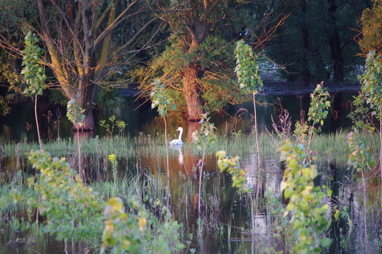 Danube Delta Romania scenery