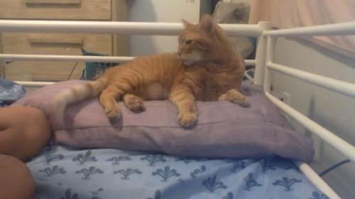 Garthlover's Cat