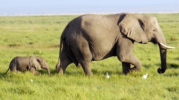 Huge-and-Massive-Elephant-elephants-3520