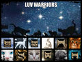 Luv Warriors