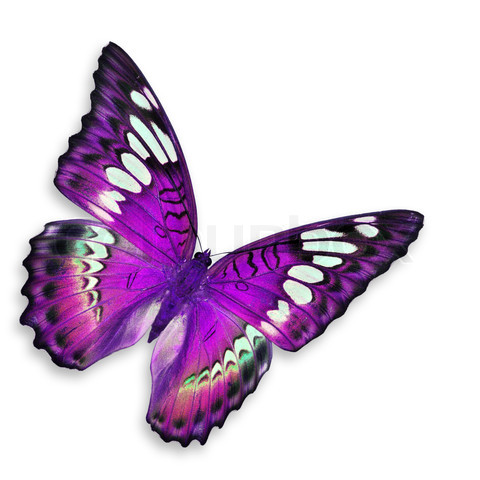 Purple mariposas ♡