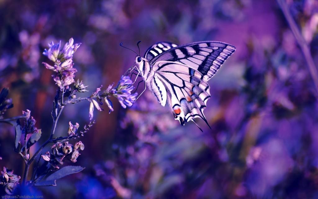 Purple तितलियों ♡