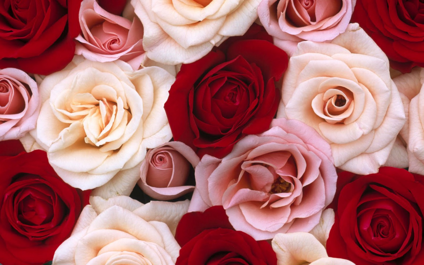 Flowers Images Roses HD Wallpaper And Background Photos