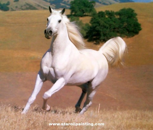 Horses wallpaper possibly containing a lippizan titled White Horse ♡