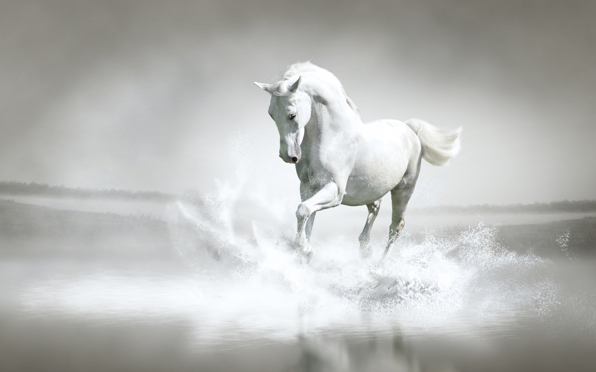 http://images6.fanpop.com/image/photos/35200000/White-Horse-horses-35203666-1920-1200.jpg