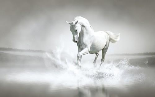 White Horse ♡