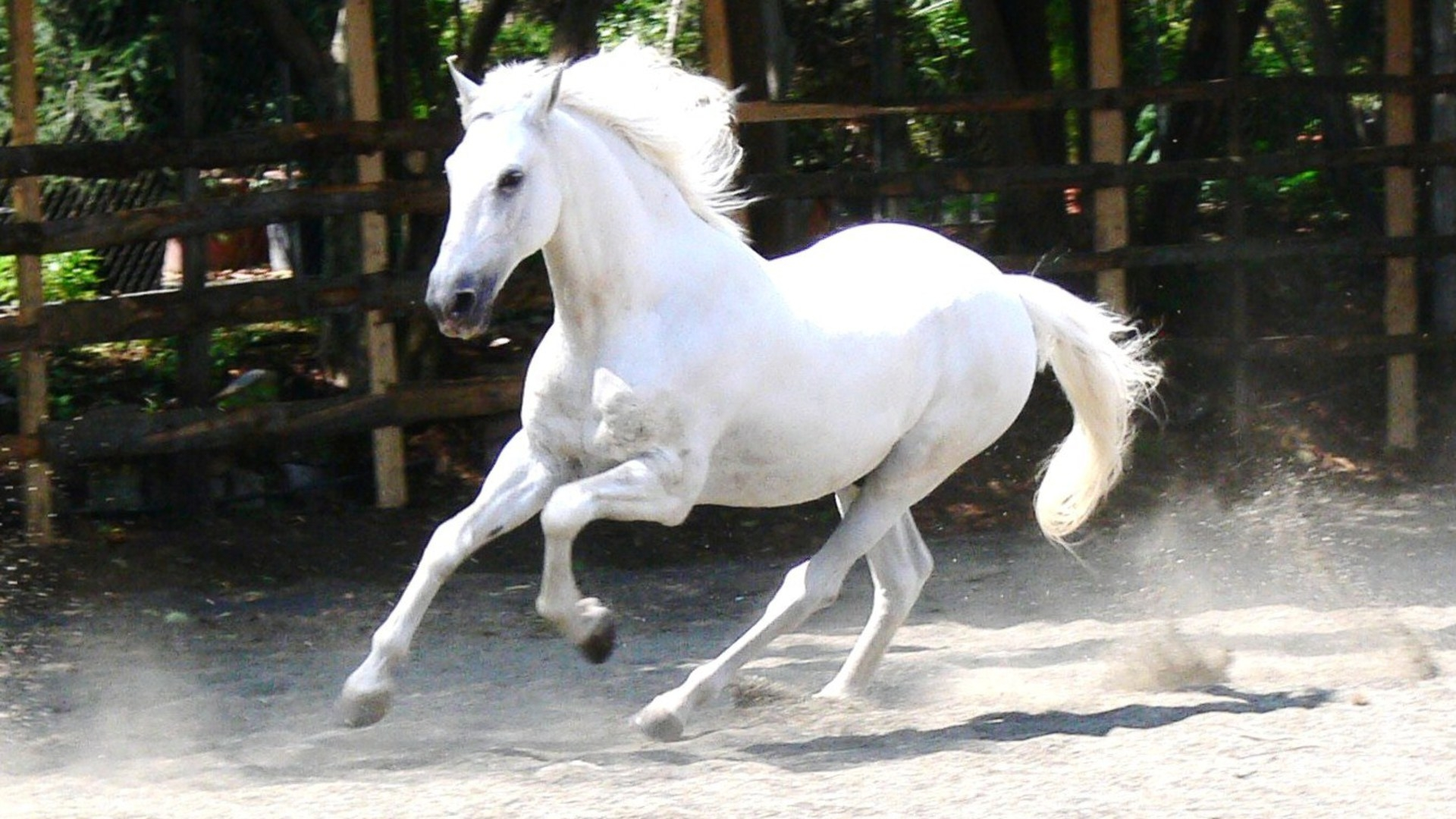 White horse pictures hd