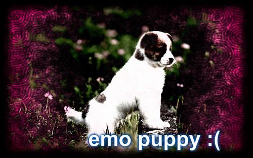 emo puppy