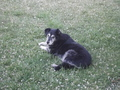 this is my 13 year old dog casey that just died :(  :(  :(  :( - animal-rights photo