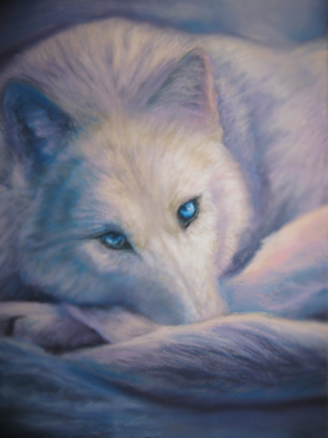 white wolf drawing