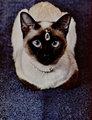 ★ Siamese gatos ☆