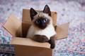 ★ Siamese Cats ☆
