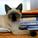 ★ Siamese cats ☆  - siamese-cats icon