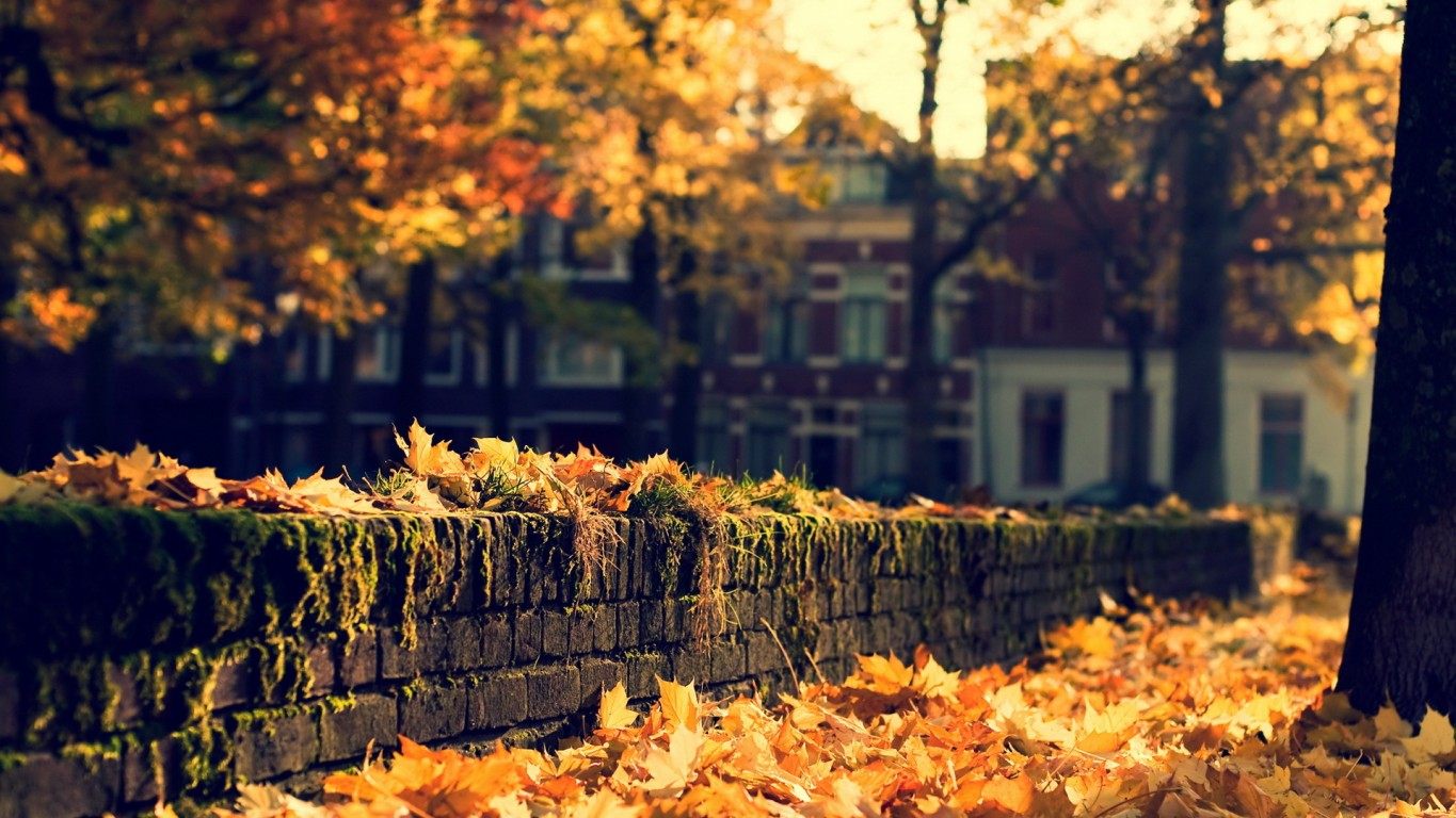 autumn images autumn in the city hd wallpaper and background photos